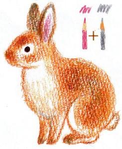 рисуем кролика поэтапно карандашом