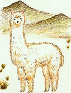 рисуем альпака