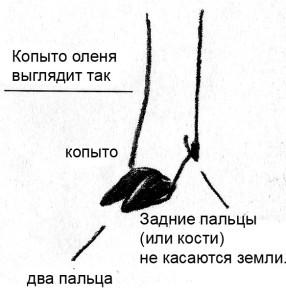рисунок ноги оленя