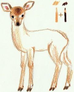 пятнистого оленя карандашом