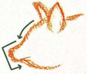 рисуем контуры рыла