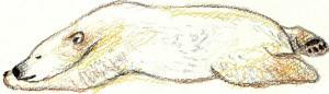 белый медведь нарисовать