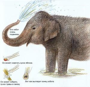 нарисовать слона просто
