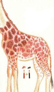 как нарисовать жирафа для детей