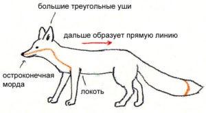Как нарисовать лисицу карандашом