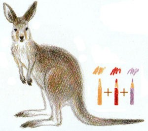 кенгуру рисовать