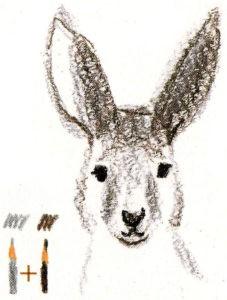как нарисовать кенгуру для детей
