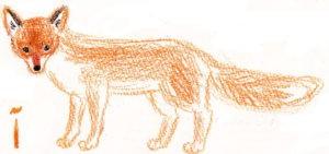 Кончик хвоста лисы белый