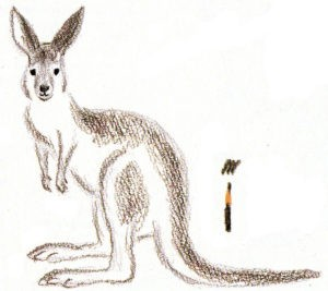 рисовать кенгуру