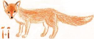 лиса картинки нарисованные карандашом