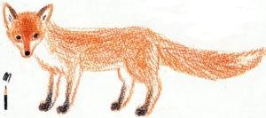 нарисованный карандашом лис