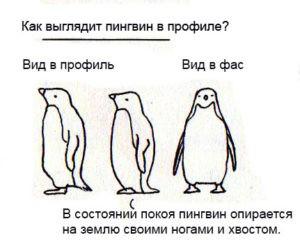 рисунок пингвина