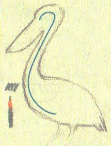 как нарисовать пеликана карандашом поэтапно