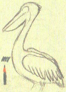 Как нарисовать Пеликана поэтапно