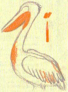 рисунки пеликана карандашом поэтапно