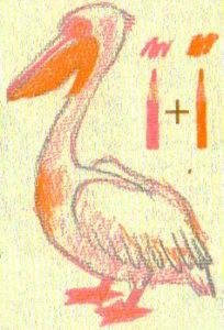как нарисовать пеликана