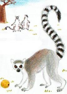 Как нарисовать лемура
